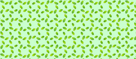 Pattern with mint leaves on the trendy solid green backdrop, ecology concept, Horizontal banner format Standard-Bild