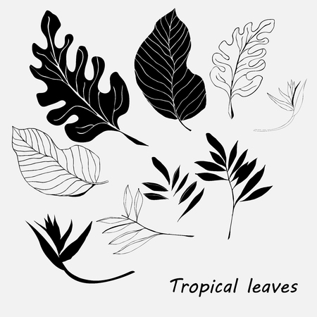 Silhouettes of different tropic leaves and flowers on a white background
