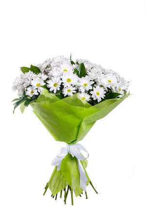 A bouquet of white camomiles, chrysanthemums in a light green package and tied with a white ribbon. A holiday, a gift for a woman. Big and smart. Side view. Isolated. Stock Photo