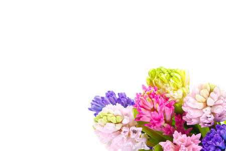 Lilac, blue, pink, raspberry hyacinths in a small, low bouquet on a white isolated background, view from above. A holiday, a gift for a woman, mom, postcard, free space