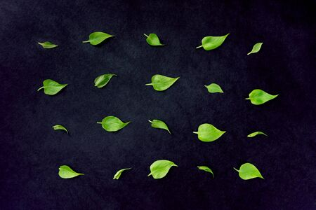 Pattern of young fresh spring leaves on black background. Eco friendly, zero waste concept. Flat lay. Banco de Imagens