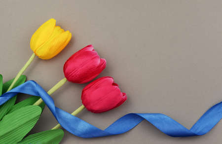 banner with red yellow tulips flowers on a grey background with a ribbon of blue  on the Valentine's Day festivities March 8 Mother's Day