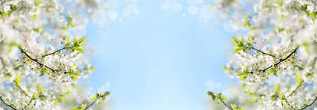 banner background with blooming trees on a garden with flower highlights and sky in spring and summer