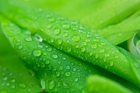 green leaf plant macro close-up with dew drops