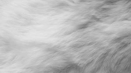 White silk feathers background. Wool, white rabbit skin Reklamní fotografie - 124527194