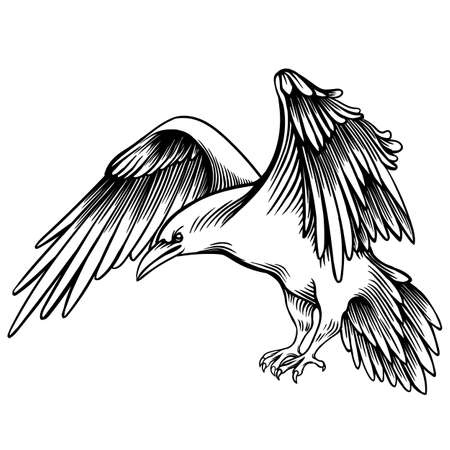 Vector Illustration of a Crow. Sketched Little Raven. Monochrome Freehand Drawing. Linear Graphic. Stylized black and White Beautiful Bird. Realistic Pen Drawing Imitation. Animal Art. Ilustração