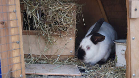 Line of domestic rabbits are eating grain and grass in farm hutch