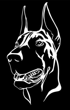 Doberman portrait with a red collar. Vector illustration.