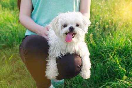 bichon: Beautiful girl with a young dog enjoying a beautiful day in the outdoors