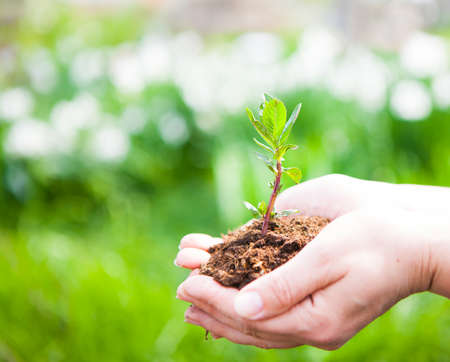 Weibliche Hände halten junge Pflanze in der Hand gegen Frühjahr grünen Hintergrund. Ökologie-Konzept. Tag der Erde. April