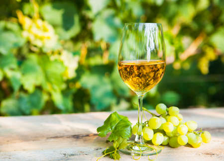 sorts: White grapes and one glass of white wine in the vineyard Stock Photo