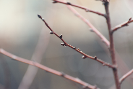 Tree branch with a transparent drop without leaves early in the morning after rain