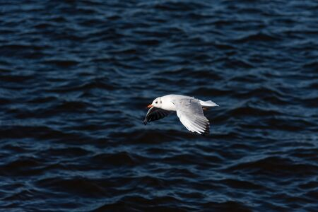 Seagulls fly on a beautiful blue sea or ocean