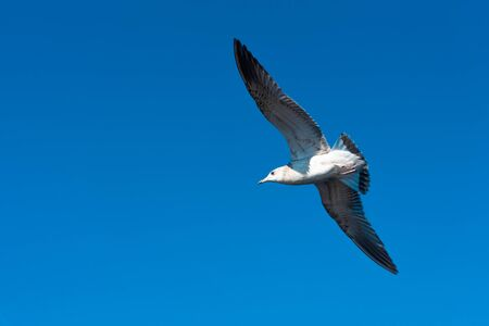 Seagulls fly in the beautiful blue sky and the sea 免版税图像