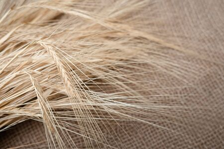 Yellow dry spikelets of wheat on burlap. Place for text. Still life close up. 免版税图像