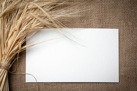 Yellow dry spikelets of wheat on burlap and white space for text. Still life close-up.