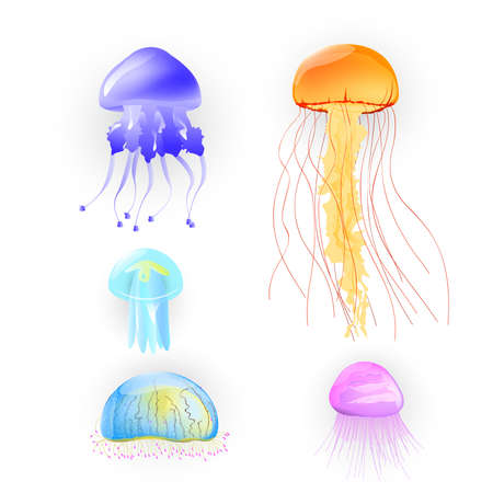 Illustration of different kinds of jellyfish
