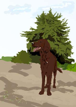 rescue dog: Dog near the tree