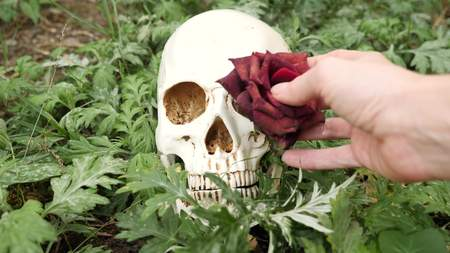 The hands put withered burgundy roses in the eye sockets of the skull. copy space
