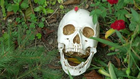 skull on the grass among the roses. copy space