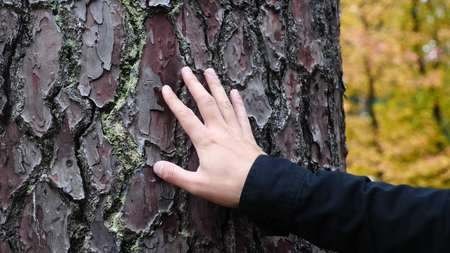 Close up, mans hand, as he feels the bark of a tree, Slow Motion