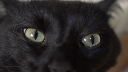 close-up, green eyes of a black cat.
