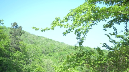 a tree branch trembling in the wind against the blue sky and the green mountain 스톡 콘텐츠