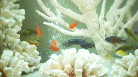 beautifully designed aquarium. corals and aquarium fish