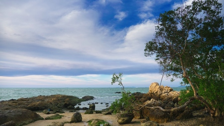 a small tree with a twisted trunk on the rocky coast of the sea. windy weather Stok Fotoğraf