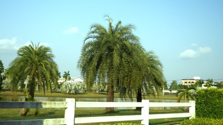 beautiful palm trees in a tropical park by the lake