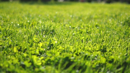 close-up. juicy green young trimmed grass in the sun, bright fresh background, texture