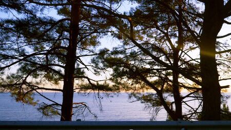 The view from the car window. pine trees by the sea and amazing lilac sunset over the sea. Auto Travel