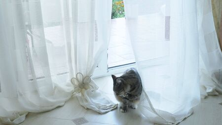the cat enters the house through a glass door with curtains