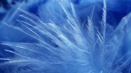 super close-up, details. blue fluff in a neckpiece. copy space