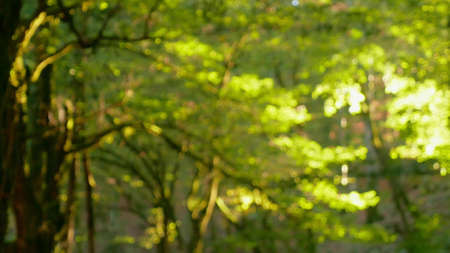 blurred background, rainforest with sunbeams breaking through the foliage