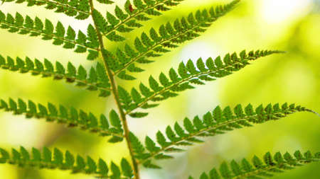 close-up. fern leaf with spores in the forest in the wind 版權商用圖片