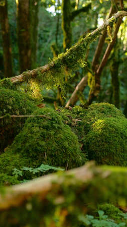 close-up, moss in the forest fluttering in the wind. the lights of a sun