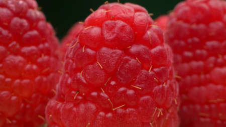 super close-up, detailed. lots of ripe red raspberries on a blue plate