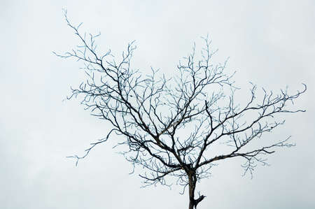 Lonely dying tree with grey sky Stock Photo
