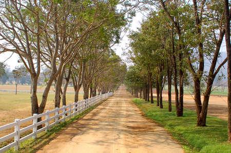 Road in a farm Stock Photo - 10136197