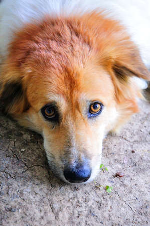 Sad dog Stock Photo - 10312832