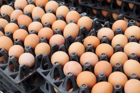 fragile industry: eggs on carton