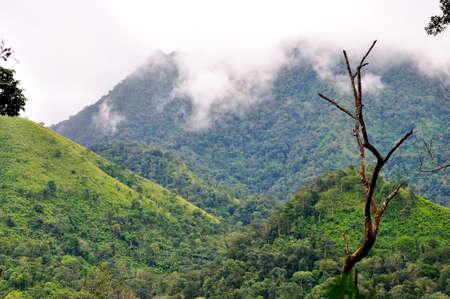 soi: poo soi dao national park, thailand