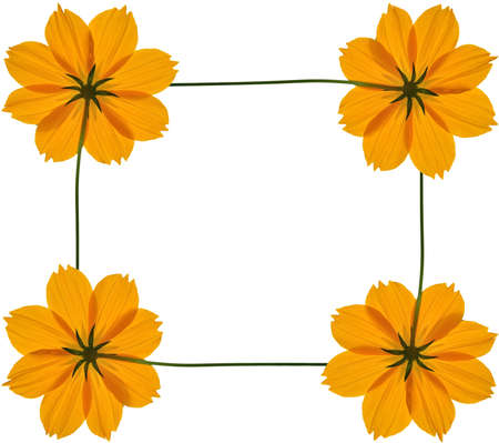 text box: tickseed flower text frame Stock Photo