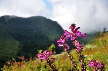 Rare flower of ChiangDao mountain, Thailand Stock Photo - 12163951