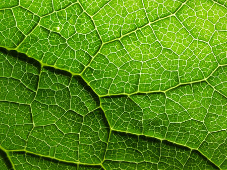 Macro on leaf texture Stock Photo - 15165990