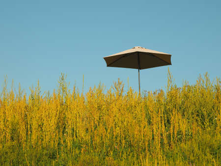 An umbrella in a grass field