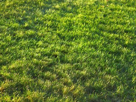 Grass field background Stock Photo - 15165992