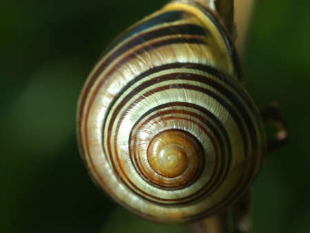 A snail on a tree branch