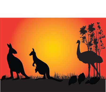 �meu: Kangourou et emu dans le coucher du soleil.  Illustration